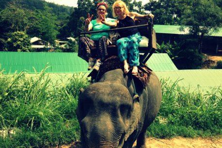 Elephant Camp di Maesa